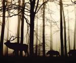 Курсы охотников